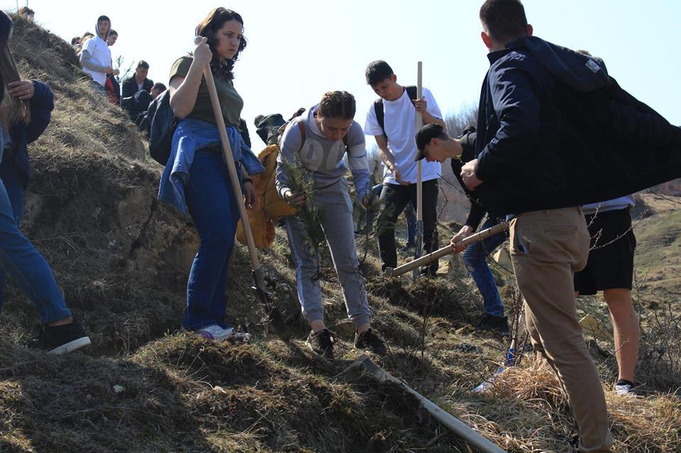 Plantare de copaci la Cireșoaia