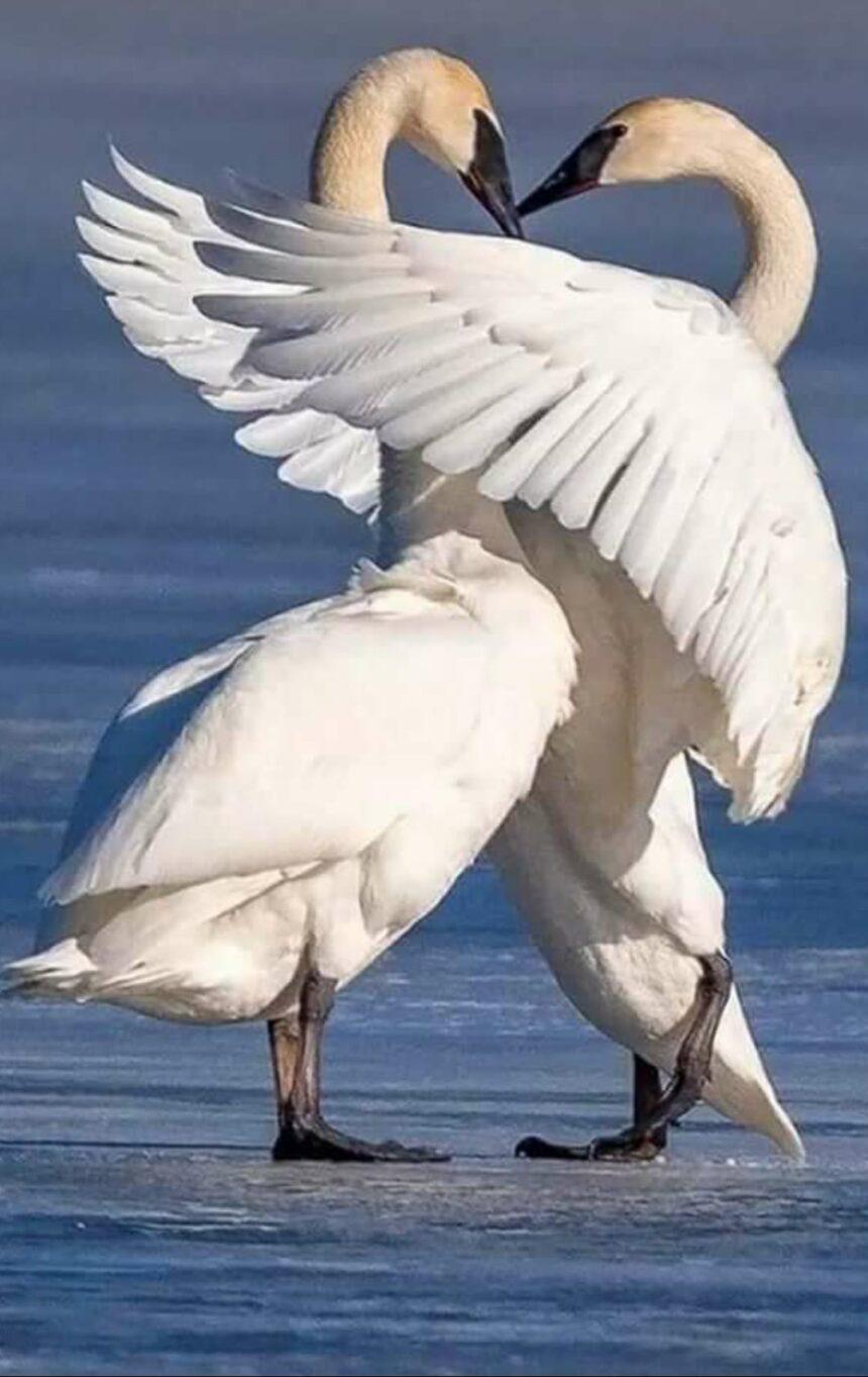 """""""Dragostea  este  zarea liberă, unde sufletul  poate să își întindă aripile"""""""
