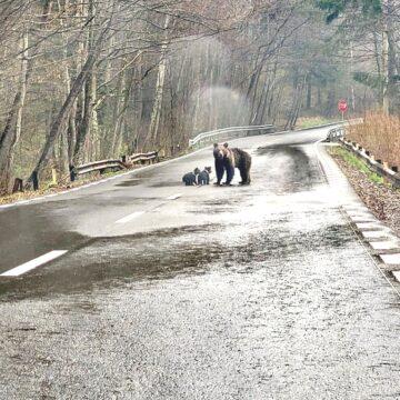 Imaginile zilei – miercuri  14 aprilie, Slănic Moldova, ora  14.30, zona  după izvoare
